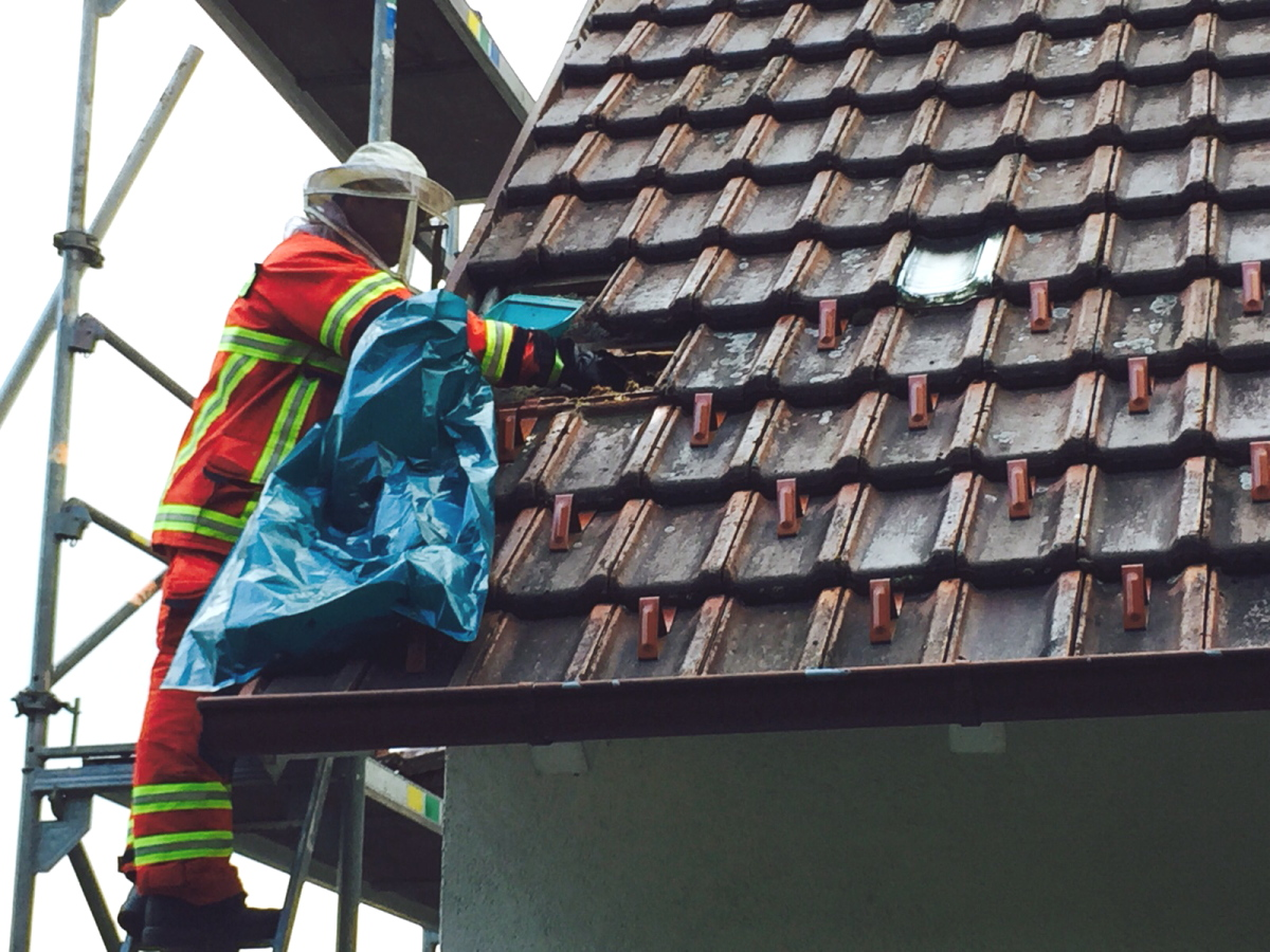 Freiwillige Feuerwehr Wurmlingen Technische Hilfe Insekten
